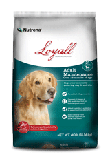 Loyall Adult Maintenance